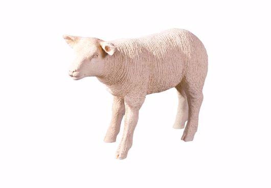Picture of TEXELAAR SHEEP LAMB, CREAM